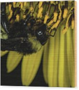 Pollen Collector 3 Wood Print