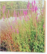 Pond In The Bershire Mountains, Massachusetts Wood Print