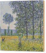 Poplars In The Sunlight Wood Print