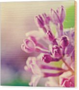 Purple Spring Lilac Flowers Blooming Close-up Wood Print