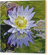 Purple Water Lily Pond Flower Wall Decor Wood Print