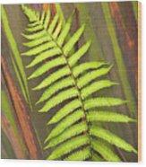 Rainbow Eucalyptus And Fern Wood Print