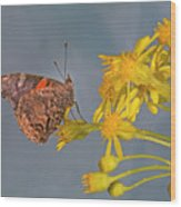 Red Admirable Butterfly Wood Print