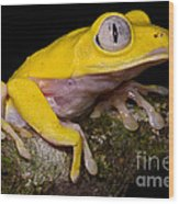 Red-eyed Treefrog, Xanthic Form Wood Print