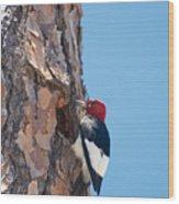 Red Headed Woodpecker Wood Print