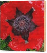 Red Poppy Photograph Wood Print