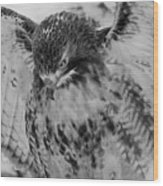 Red-tailed Hawk In Snow Wood Print