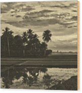 Rice Field Sunrise - Indonesia Wood Print