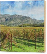Rows Of Grapevines In Napa Valley Caliofnia Wood Print