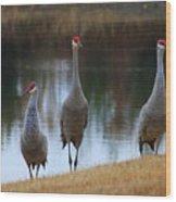 Sandhill Crane Family By Pond Wood Print