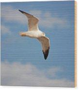 2- Seagull Wood Print