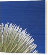 Silversword Plant Wood Print
