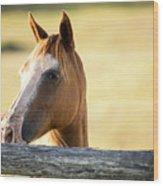 Single Horse Wood Print