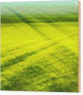 Skagit Valley Daffodils Wood Print
