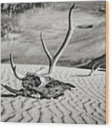 Skull And Antlers Wood Print