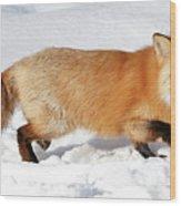 Sneaky Red Fox Wood Print