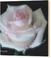 Soft Pink Rose Bud Wood Print