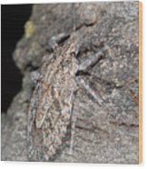 Stink Bug Wood Print