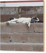 Street Dog Sleeping On Steps Wood Print