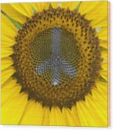 Sunflower Peace Sign Wood Print