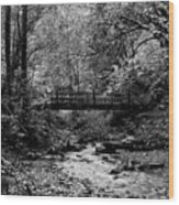Swan Creek Park Wood Print