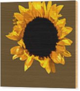 Sunflower Stretching On Brown Wood Print