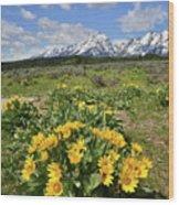 Teton Balsam Root Wood Print