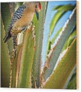 The Gila Woodpecker Wood Print