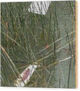 The Lodge At Blue Lakes Decaying Fish Wood Print