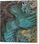 Tide Pool Wood Print