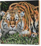 Tiger Collection Wood Print