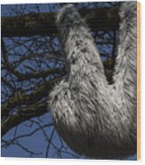 Tree Decorated With Apes Wood Print