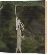 Tree Snake Eating Gecko Wood Print