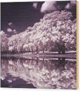 Trees At The Carabobo Field Wood Print