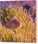 Tropical Fish Pink Clownfish Wood Print