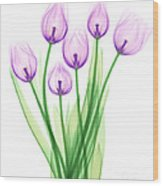 Tulips, X-ray Wood Print