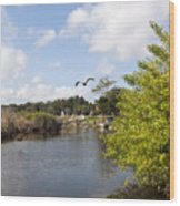Turkey Creek In Palm Bay Florida Wood Print