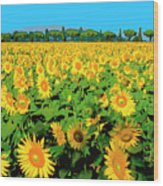 Tuscany Sunflowers Wood Print