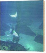 Underwater Blue Background Wood Print
