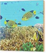 Underwater Panorama Wood Print