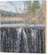 Vermont Swamp Wood Print