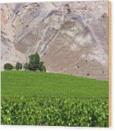 Vines Contrasting With Chiles Atacama Desert Wood Print