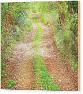 Walkway In Secluded Deciduous Forest Wood Print