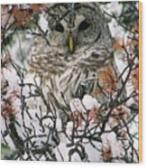 What A Hoot Wood Print