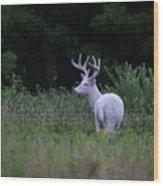 White Buck Wood Print