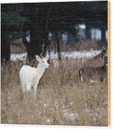 White Buck Brown Doe Wood Print
