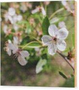 White Cherry Flower Wood Print
