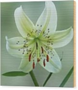 White Tiger Lily Wood Print
