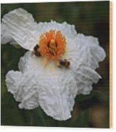 White Poppy And Bee Wood Print