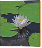 2- White Water Lily Wood Print